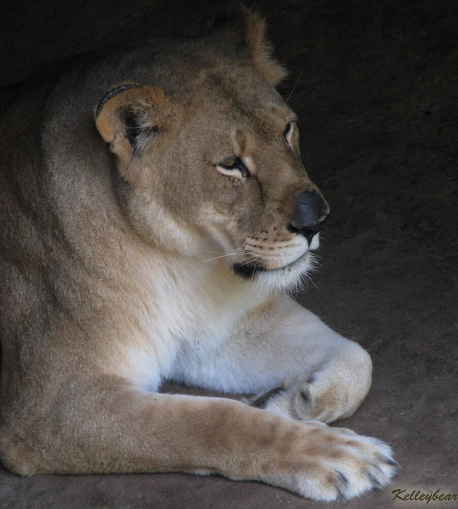 A Lioness  by kelleybear