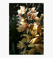 Orchid Spray 1 Photographic Print