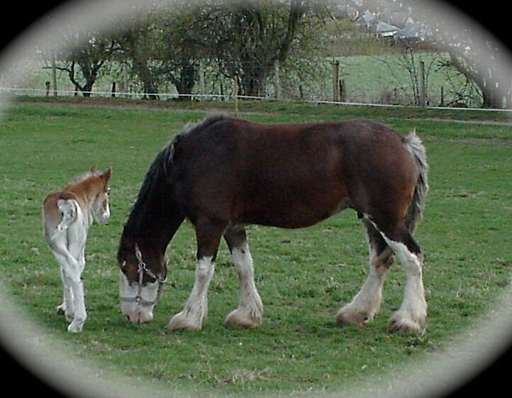 Shire Horse and Foal by Braedene