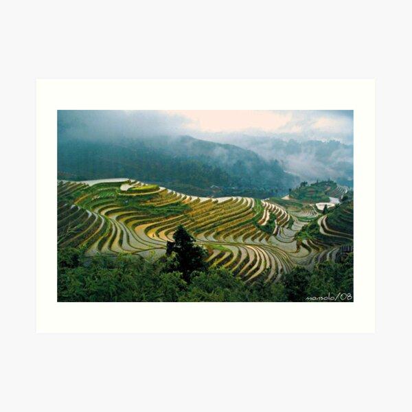 Rice Terraces(Banaue,Phil.) Art Print