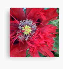 Double Red Poppy Canvas Print
