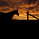 Sunrise horse silhouette by Sarah Matula Photography