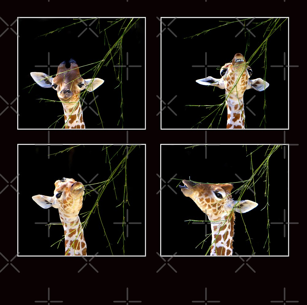 Baby Giraffe Composite by Lisa G. Putman
