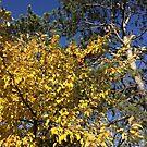 Autumn Apples by silverdragon