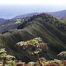 A terra verde by Anselmo Pelembe