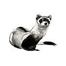 Mr. Mischief - Black Footed Ferret by Ciara Barsotti