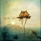Sunset by Catrin Welz-Stein