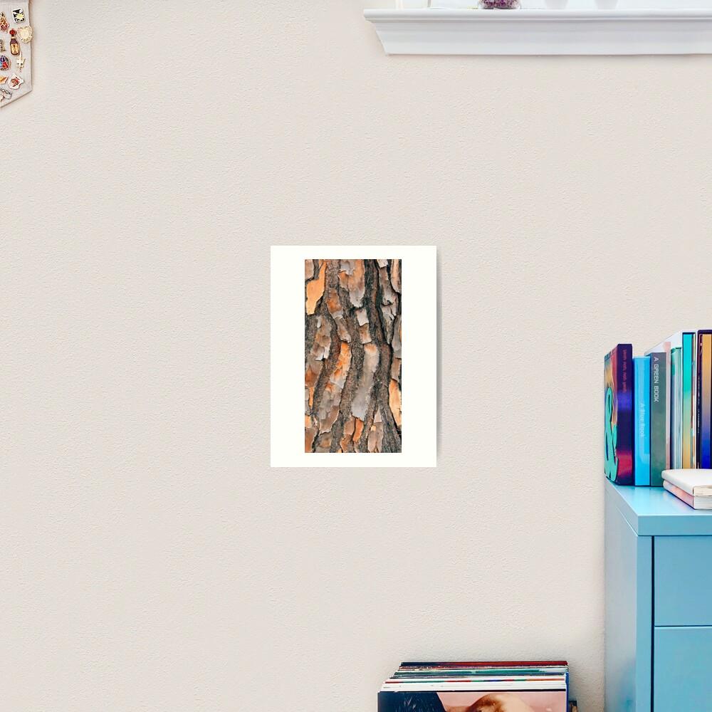 Scots Pine - in colour Art Print