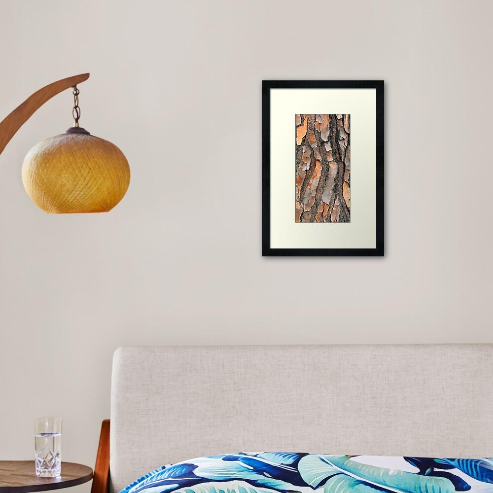 Scots Pine - in colour Framed Art Print