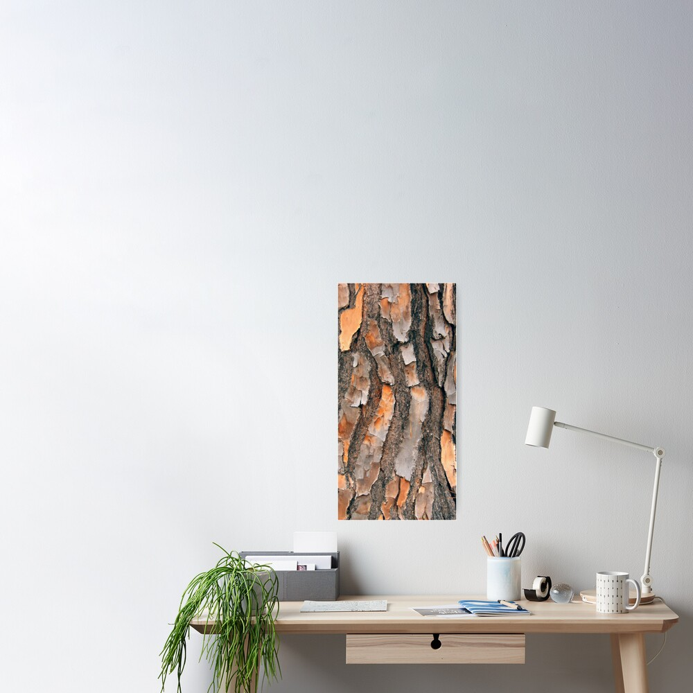 Scots Pine - in colour Poster