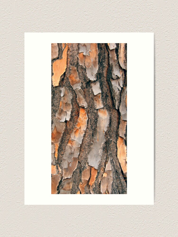 Alternate view of Scots Pine - in colour Art Print