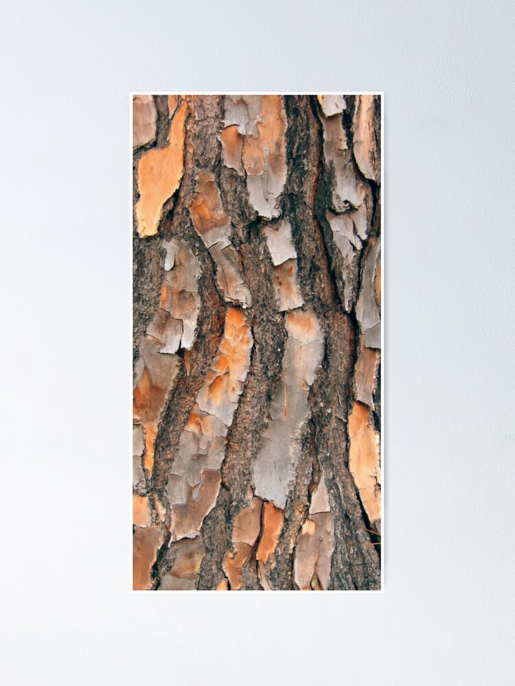 Alternate view of Scots Pine - in colour Poster
