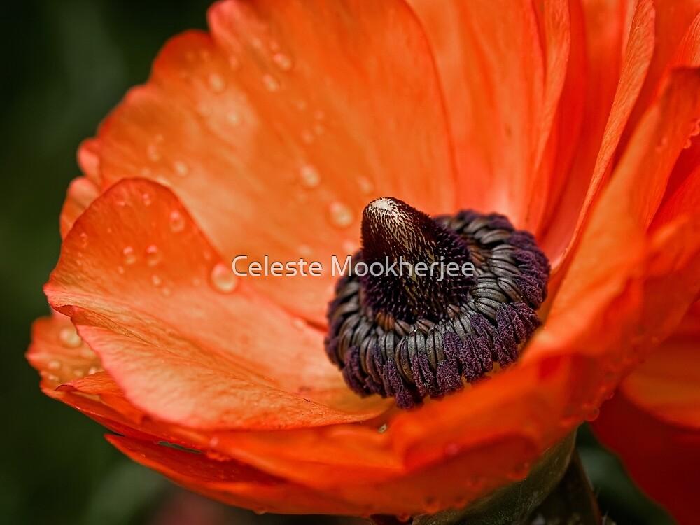 Dramatische Blüte nach dem Regen von Celeste Mookherjee