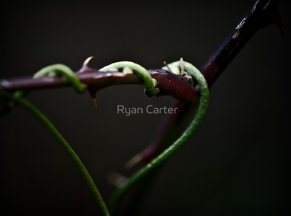 The Vine by Ryan Carter