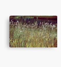 Grass Screen Canvas Print