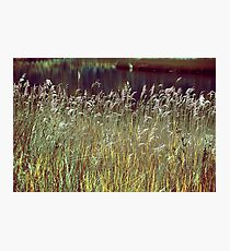 Grass Screen Photographic Print