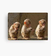 Three cute baby monkeys Canvas Print