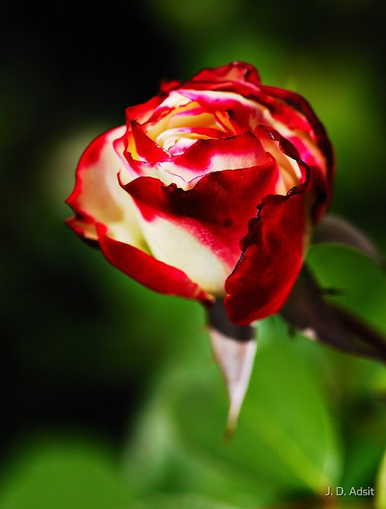 The Poet's Rose by J. D. Adsit