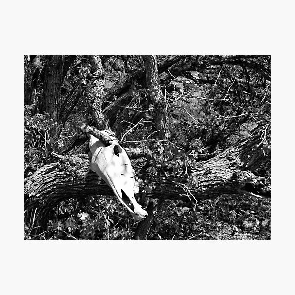 Skull And Oak In Black And White Photographic Print