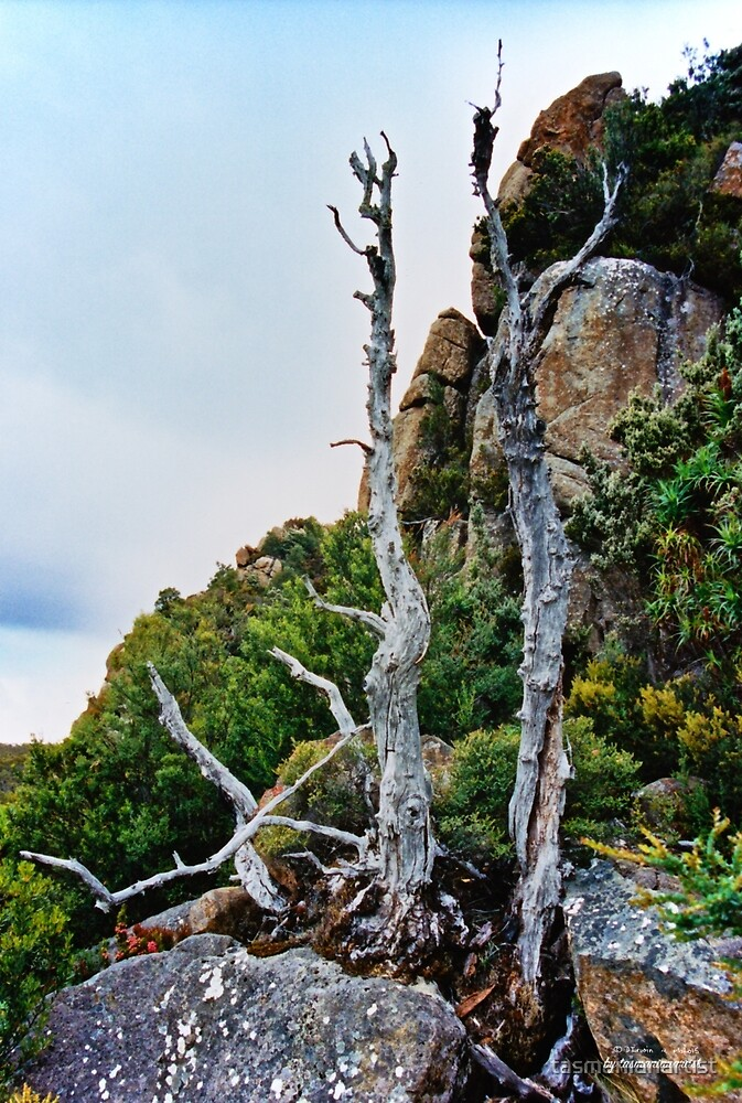 SCENES & SCENERY ~ On the Way to Tom Thumb by tasmanianartist by tasmanianartist