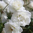 The White Rose of Serpentine by kalaryder