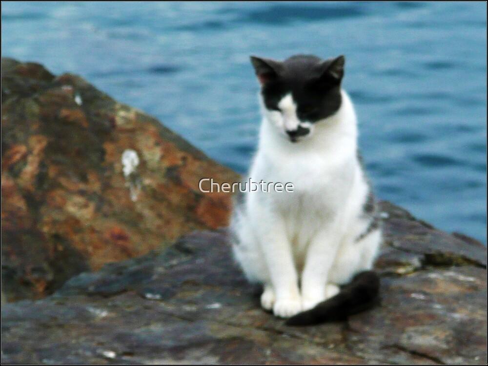 Homeless Beach Kitty:  by Cherubtree