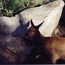Elk's Shadow... by mwmclaren