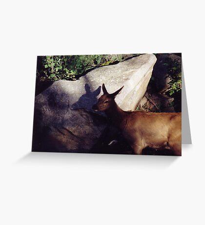 Elk's Shadow... Greeting Card