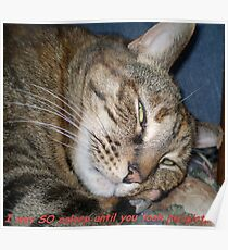 I was SO asleep until you took this picture! Poster
