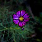 Blumen Herbst von VanGalt