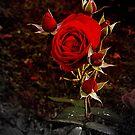 Rose... by Alojzy