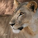 Tarangire beauty by Lynda Harris