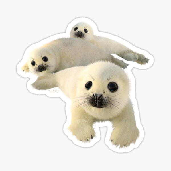 Grey seals Sticker