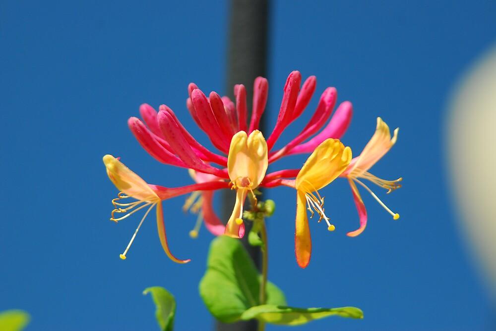 Colorful flower by kentuckyblueman