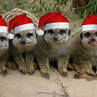 Have a Meerkat Christmas!  by LizzieMorrison