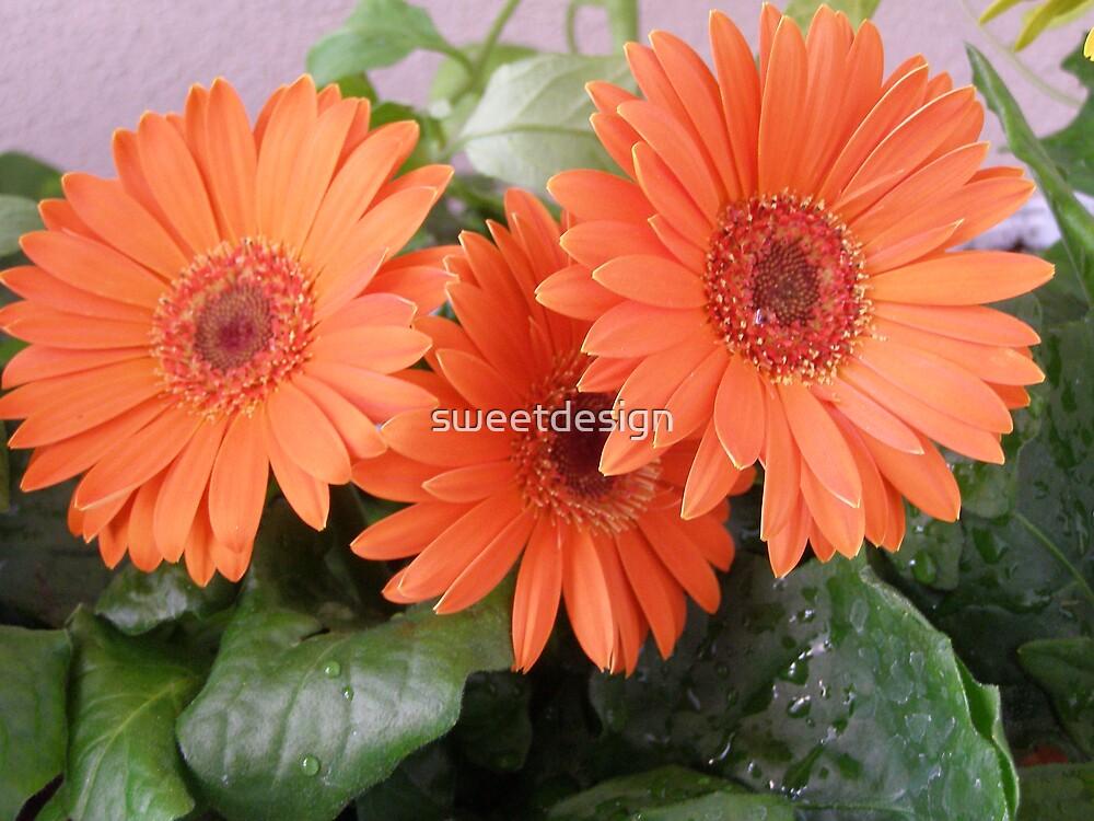Orange  by sweetdesign