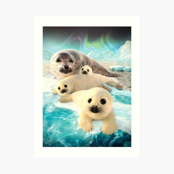Grey seals arctic Art Print