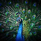 Peacock by Mikhail Palinchak