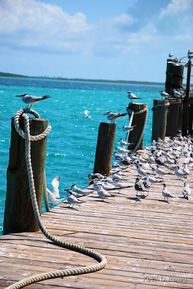 Bird Paradise by Kevin D. Raney