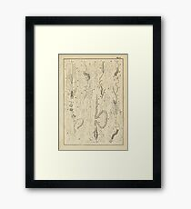 Microscopic Biology Framed Print