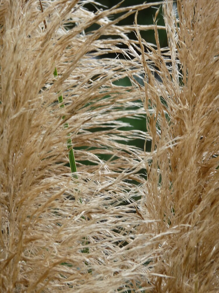 Pampas by abryant