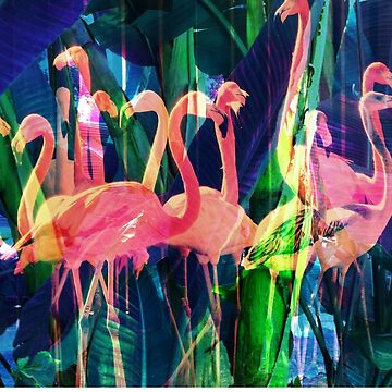 Flamingo Dance de elenor27
