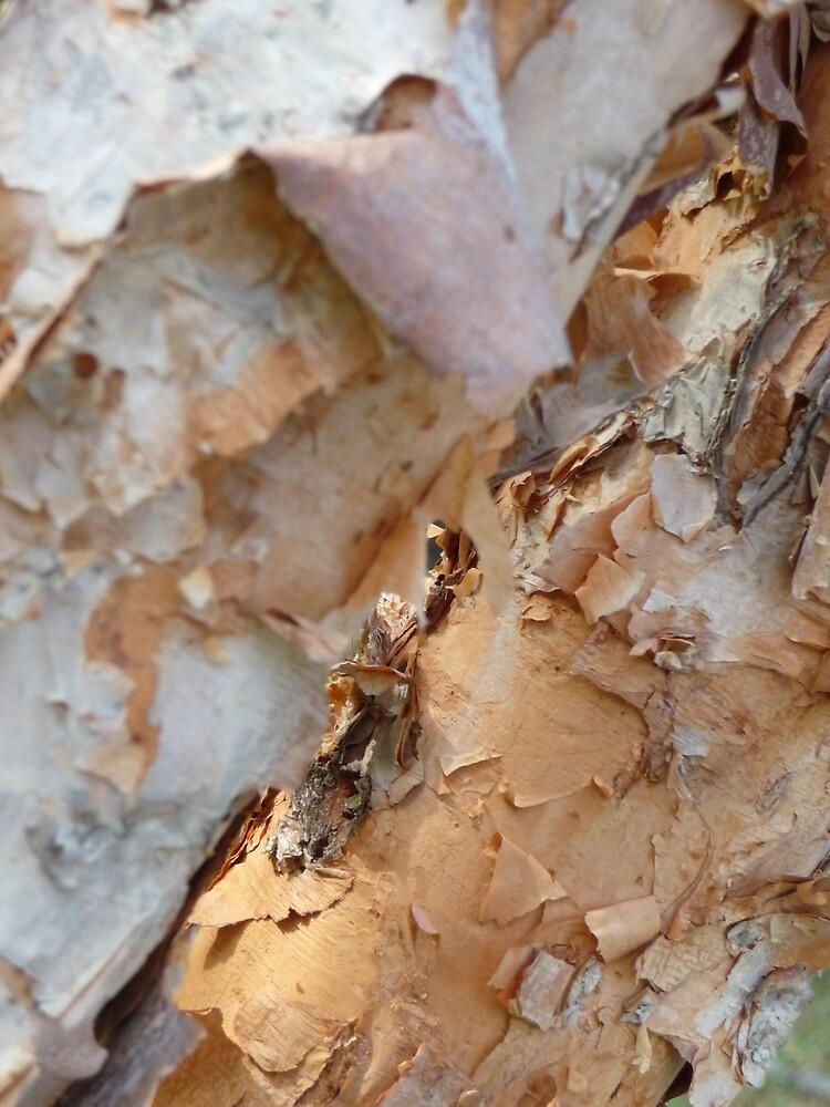Birch Bark by abryant