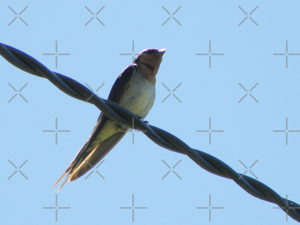 Swallow on a wire by CapturedByKylie