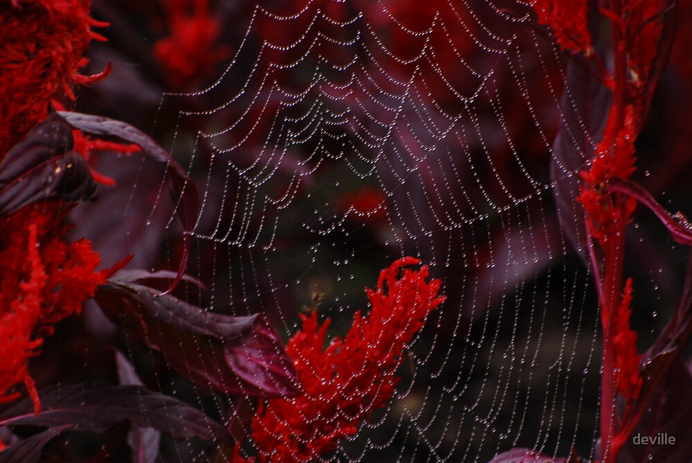 spiders web by deville
