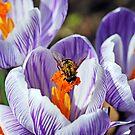 To Bee Happy by Debbie Oppermann