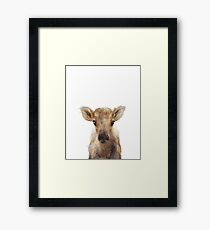 Little Reindeer Framed Print