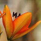 Lovely Lady - Lily by Debbie Oppermann