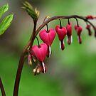 Bleeding Hearts by Debbie Oppermann