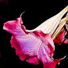 Pixie's horn  by solareclips~Julie  Alexander
